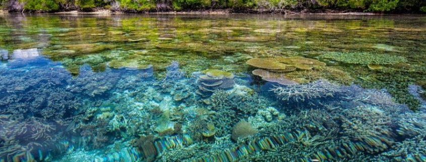 Coast-coral-reef-transparancy