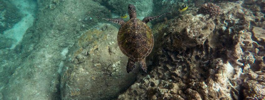 Turtle-coral-ocean